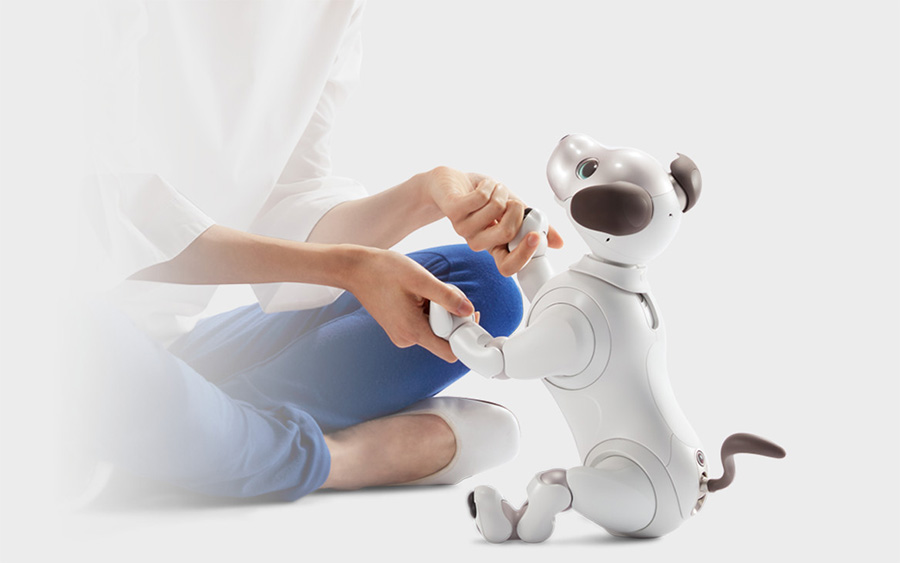 Person playing with aibo