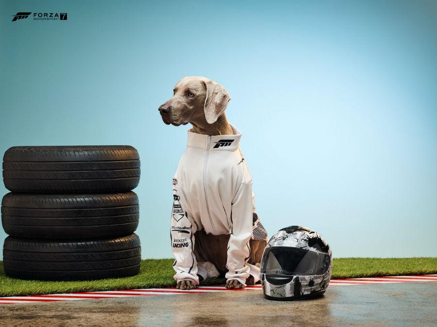 Dog representing Forza Racing