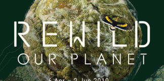 Poster for REWILD Our Planet, Singapore's first Social Augmented Reality (AR) experience
